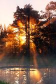 Rayos de sol detrás de bosque en la mañana brumosa — Foto de Stock