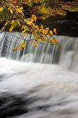 Höstlöv och vattenfall — Stockfoto