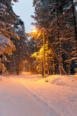 Runway in snowy forest — Stock Photo