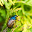 Stock Photo: Fat insect on green plant