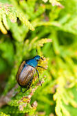 Fat insect on green plant — Stock Photo