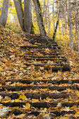 Escada e amarelas folhas de outono — Foto Stock