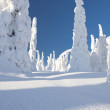 Snowy forest in Lapland, Finland — Stock Photo