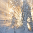 Sunrays through snowy forest — Stock Photo