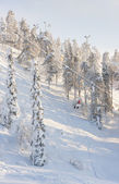 Ski elevators in snowy forest in mountain — Stock Photo