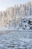 Icy water in snowy forest — Stock fotografie