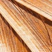 Close-up van hout bladeren — Stockfoto