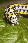 Yellow worm with black dots — Stock Photo