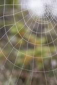 Wet spiderweb — Stock Photo
