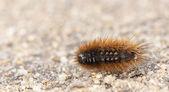 Little orange larva on the ground — Stock Photo