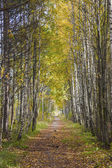 Alley in forest — Stock Photo