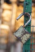 Open padlock on a gate — Stock Photo