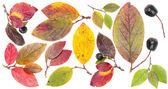 多彩的秋天树叶 — 图库照片