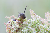 Snail on a plant — Stock Photo