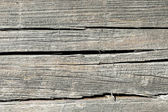 Old tree trunk wall — Stock Photo