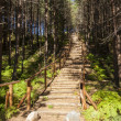 Stock Photo: Wooden stairs in forest