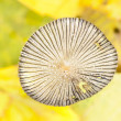 Stock Photo: Fungus cap closeup