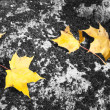 Stock Photo: Yellow maple leaves on rock