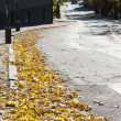 Autumn leaves on road — Stock Photo