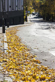 Autumn leaves on road — Foto Stock