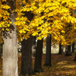 Chestnut tree in autumn — Stock Photo