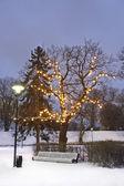 White park seat under illuminated tree in winter — 图库照片