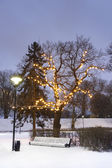White park seat under illuminated tree in winter — Foto de Stock