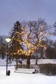 White park seat under illuminated tree in winter — Stock Photo