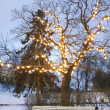 Stock Photo: White park bench under illuminated tree in winter