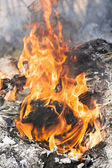 Fire flames around black tree log — Stock Photo