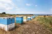 Wooden Bee hives in the meadow — Stock Photo