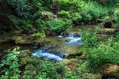 在森林里的美丽瀑布 — 图库照片