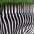 Zebra neck pattern - Stock Photo