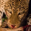 Stock Photo: Wild leopard with a kill at night