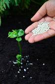 Närbild på gödsling en ung planta — Stockfoto
