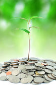 Tree growing on money — Stock Photo