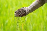 Pianta di fertilizzante sulla mano del coltivatore — Foto Stock