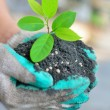 Hand holding tree growing with soil — Stock Photo #30839531