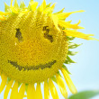 Stock Photo: Sunflower with smiley face over blue sky