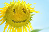 Sunflower with smiley face over blue sky — Stock Photo