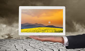 Businessman holding tablet an display sunset meadow — Zdjęcie stockowe