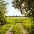 Summer landscape — Stock Photo #41442927