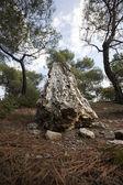 Petrified tree stub — Stock Photo