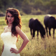 Bride in a field with horses - Stock Photo
