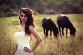Bride in a field with horses — Stock Photo
