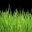 Royalty-Free Stock Photo: Green Grass Panorama Isolated On Black 101 Megapixels
