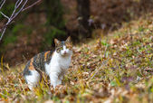 Colorful home cat in the forest looking for hunting — Foto Stock