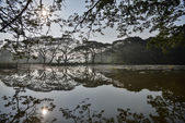 Tropical landscpe — Stock Photo
