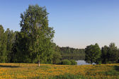 Summer landscape at the lake. — Stock Photo