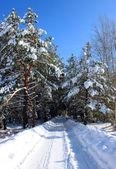 Paisagem da estrada inverno na madeira. — Fotografia Stock